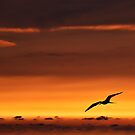Sunset Flight by Lynnette Peizer