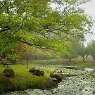 Monet in the mist ... #2 by Rosalie Dale