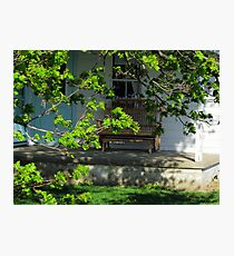Amish Porch Through Blooming Branches Photographic Print