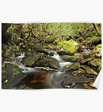 Fagus Country Poster