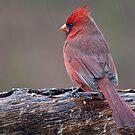 Where Do Wild Birds Go When It Is Raining? by barnsis