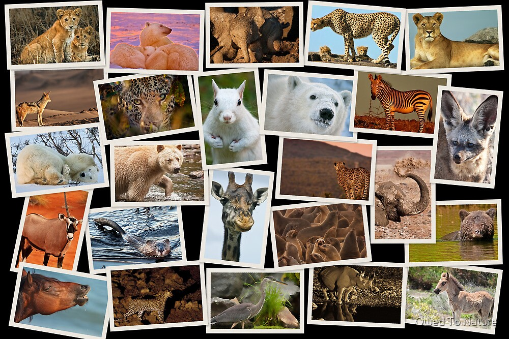 25 Faces for 25 Years by Owed To Nature