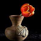 Dramatic Tulip  by RandiScott