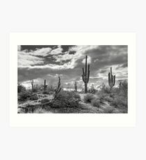 Sonoran Desert in Black and White  Art Print