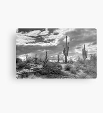 Sonoran Desert in Black and White  Metal Print