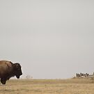 Where the Buffalo Roam by Nate Welk