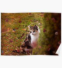Autumn Kitten  Poster