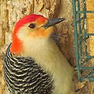 Red and His Suet by lorilee