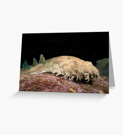 Spotted Wobbegong at the entrance to Sydney Harbour Greeting Card