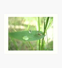 Bug on a Leaf Art Print