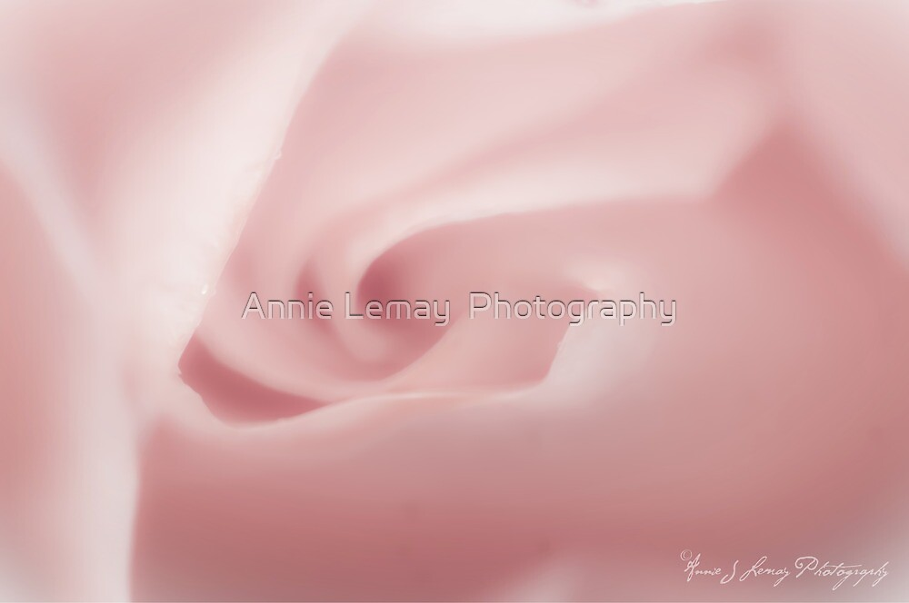 Pink by Annie Lemay  Photography