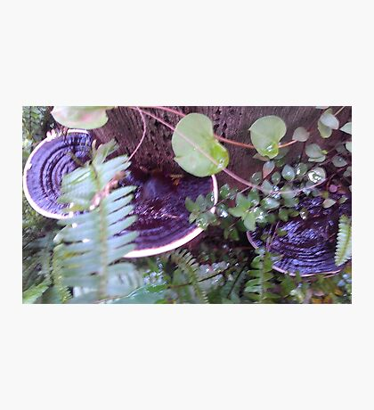 purple bracket fungi Photographic Print