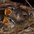 Baby Birds by Brenda  Meeks