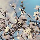 Spring Flowers by adriangeronimo