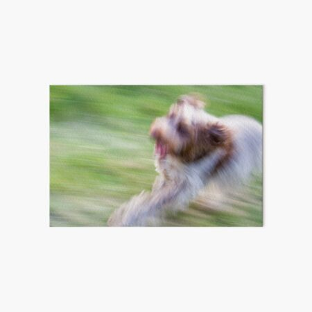 Brown Roan Italian Spinone Dog in Action Art Board Print