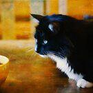 Still life with cat by Lynn Starner