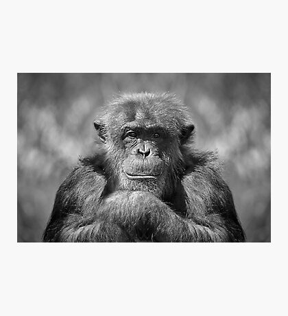 Chimp Photographic Print