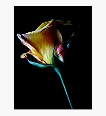 A Rose For Thee Photographic Print