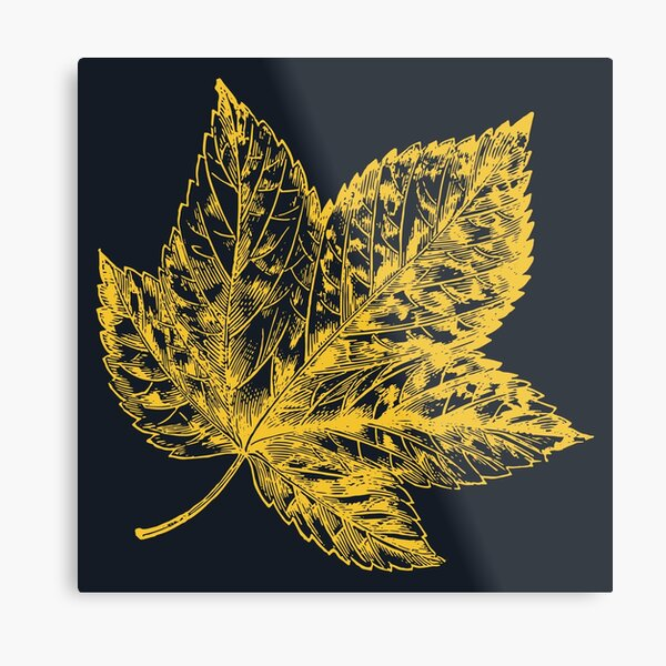 Yellow Canadian Leaf On Blue Metal Print