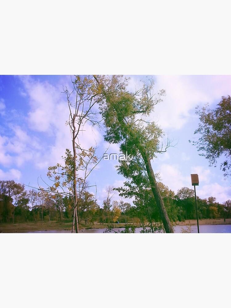 Park by amak