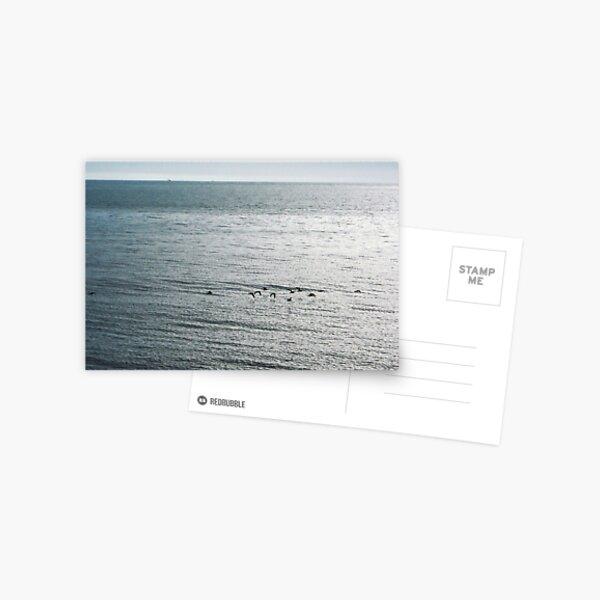 Birds Flying Over Sea Postcard