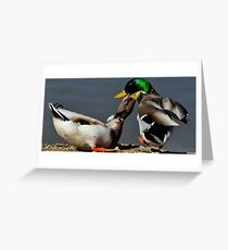 Territory Mallard Duck Squabble Greeting Card