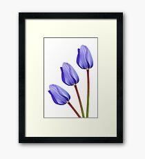 Three Purple Tulips Framed Print