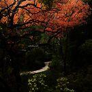 Secret Path by oddoutlet