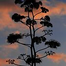 """""""  Century Plant  2  """" by fortner"""