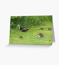 Ducklings Greeting Card