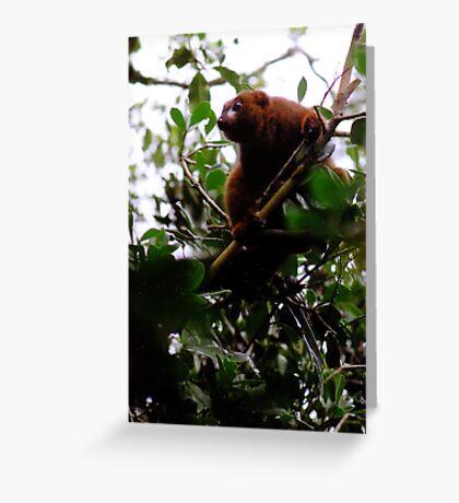 Lemur Rubriventer Greeting Card
