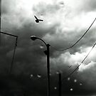 bird in storm keeps flying by Tania Palermo