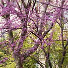 Jersey City Spring Colors, New Jersey by lenspiro