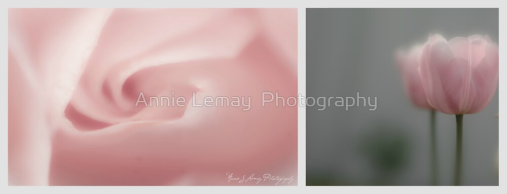 Springtime by Annie Lemay  Photography