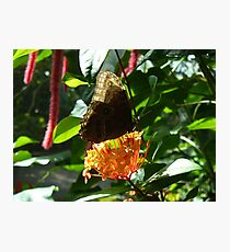 Owl Butterfly on Bright Orange Flower Photographic Print