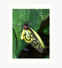 Colors of the Rainbow Butterfly Art Print