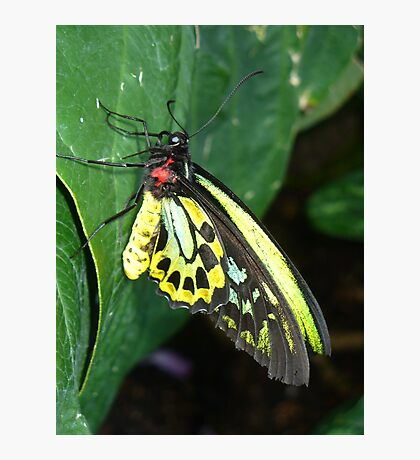 Colors of the Rainbow Butterfly Photographic Print