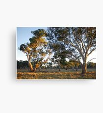Morning on Wattle Heath Farm Canvas Print