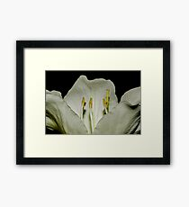 Kachnar flower Framed Print