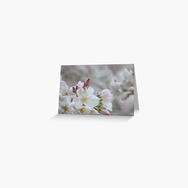 The Glory of Spring 2 Greeting Card