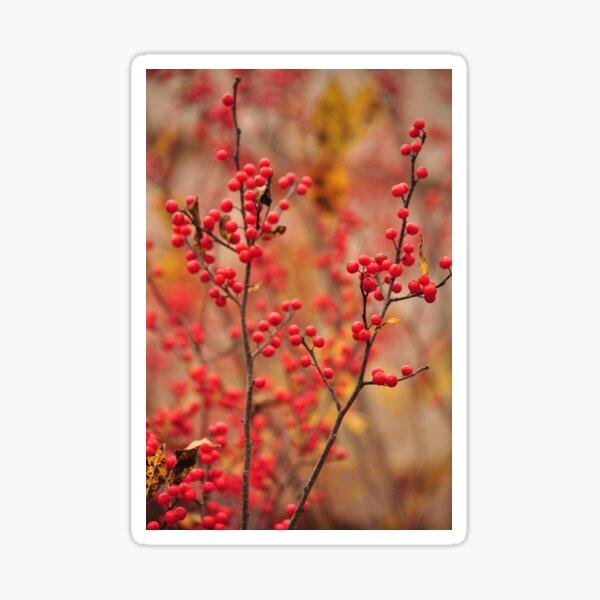 Winterberry Holly - Ilex verticillata Sticker