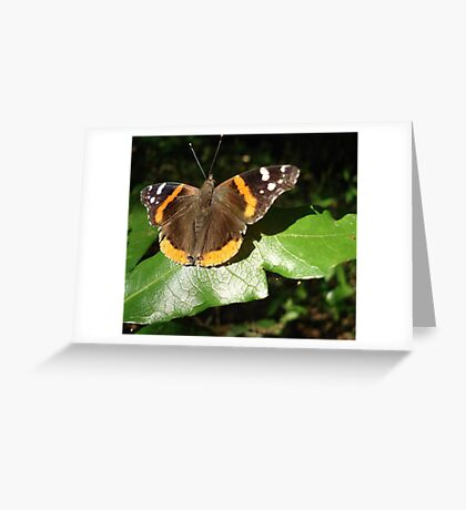 RED ADMIRAL BASKING IN THE EVENING SUN Greeting Card