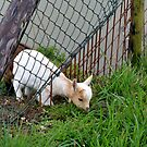the grass is always greener on the other side by Nicole W.