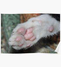 Kittens paw . Poster