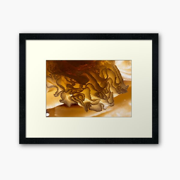 gold? what is this? Framed Art Print