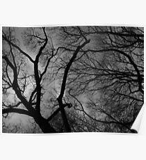 Darkened forest Poster