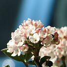 sweet spring by Adair  Davidson