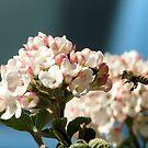 buzzing spring bloom by Adair  Davidson