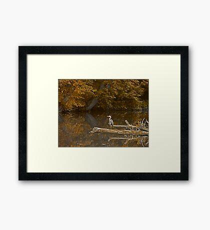 Heron at Hickory Run Framed Print
