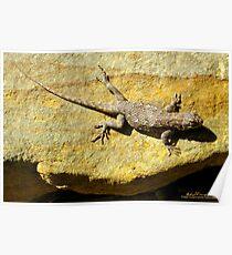 Sunning Fence Lizard Poster
